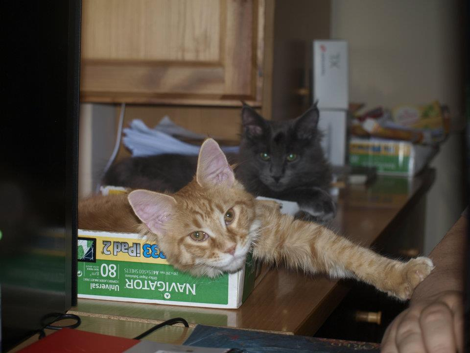Drac&Arwen